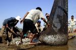 Pelaku IUU Fishing Bebas, KNTI: Contoh Buruk Penegakan Hukum
