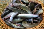 Banyuwangi Punya Destinasi Wisata Kuliner Kampung Lele