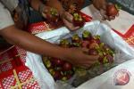 Indonesia Ekspor 93 Ton Manggis Pandeglang ke Tiongkok