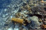Terumbu Karang Perairan Pulau Pura Alor Terancam Rusak Total