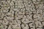 55 Kabupaten dan Kota Tetapkan Status Siaga Darurat Kekeringan