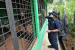 Lima Beruang Madu Jambi Jalani Rehabilitasi