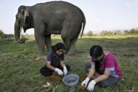 Berani Minum Kopi dari Kotoran Gajah yang Mahal dan Langka?