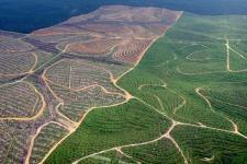 Penundaan Izin Baru Penggunaan Hutan Alam dan Gambut Diperpanjang