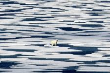 Arktika Terus Kehilangan Lapisan Es