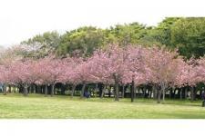 Kebun Raya Cibodas Terapkan Tiket Satu Atap