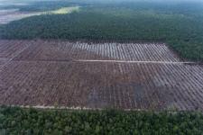 Investigasi Greenpeace Perusahaan Dunia masih Terkait Perusakan Hutan di Indonesia