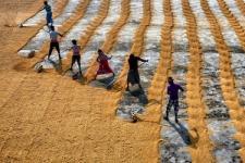 Ekspor Beras India Terhambat Akibat Pandemi Virus Corona