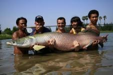 Arapaima dari Amazon Ancam Perairan Tawar Indonesia