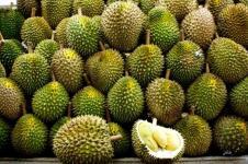 Potensi Durian Banyumas Miliaran Rupiah