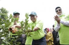 Revolusi Oranye Pusat Bibit Buah Nusantara