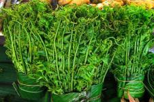 Pakis Sayur, Tumbuhan Liar Kaya Antioksidan