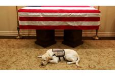 Sully, Service Dog Mantan Presiden George HW Bush Ikut Berduka