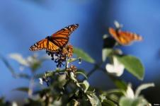 Ubah UU Perlindungan Flora dan Fauna Langka, Pemerintah AS Digugat
