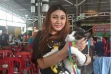 Festival Kucing Kampung di Pontianak Hadirkan Kontes Unik