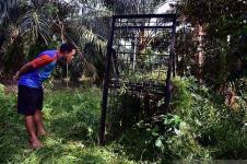 Dua Beruang Madu Masuk Ke Perkampungan Riau