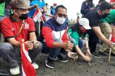 Gianyar Lepasliarkan 10.000 Tukik di Pantai Saba