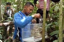 BKSDA Resor Agam Lepasliarkan Satu Ekor Kukang