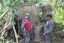 BKSDA Aceh Timur Pasang Alat Pelacak Posisi Gajah Liar
