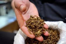 Kenya Manfaatkan Larva Lalat Memproses Limbah Makanan