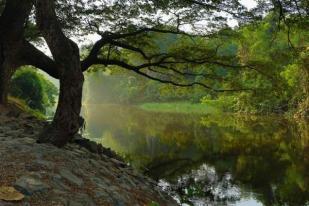 Seperti Pohon yang Ditanam di Tepi Air