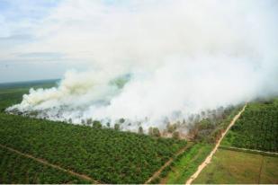 Singapura Buat UU Pidanakan WNI Pembakar lahan