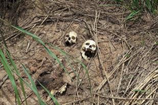 PBB Temukan 10 Kuburan Massal di RD Kongo