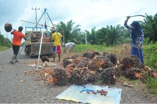 """Tudingan Eropa Terhadap Sawit Indonesia Harus """"Dilawan"""""""