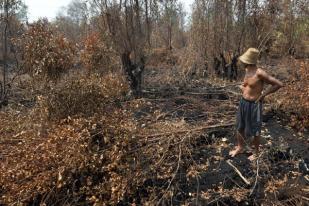 BRG-WWF Indonesia Kerja Sama Penyelamatan Ekosistem Gambut