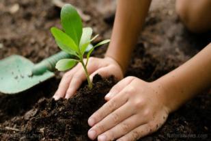 Menanam Lebih Banyak Pohon Perangi Perubahan Iklim