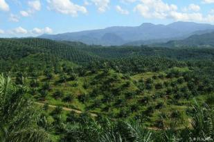 UGM Tawarkan Rekomendasi Atasi Polemik Tanaman Sawit di Kawasan Hutan