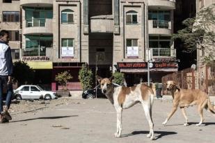 Mesir Akan Bentuk Komite Atasi Anjing Liar