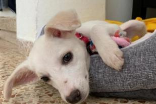 Penelitian: Anjing Memiliki Keinginan Relasi dengan Kasih
