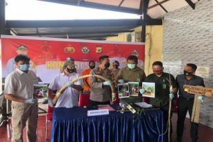 Polisi Tangkap Pemasang Pagar Listrik yang Bunuh Seekor Gajah di Pidi, Aceh