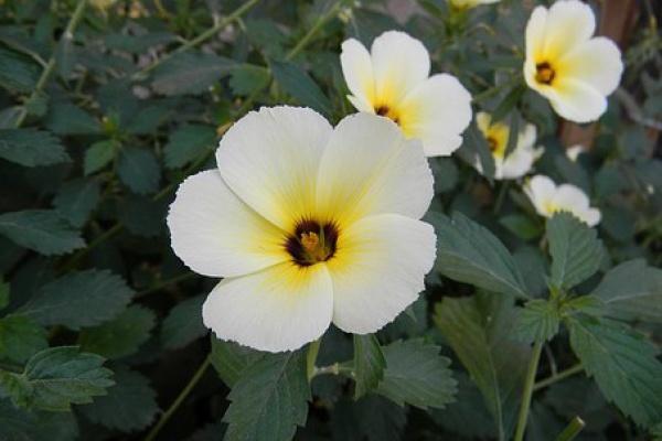 Satu Harapan Bunga Pukul Sembilan