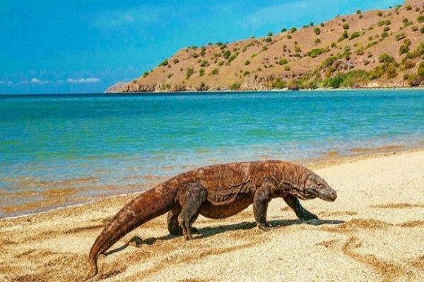 Hasil gambar untuk Taman Nasional Komodo
