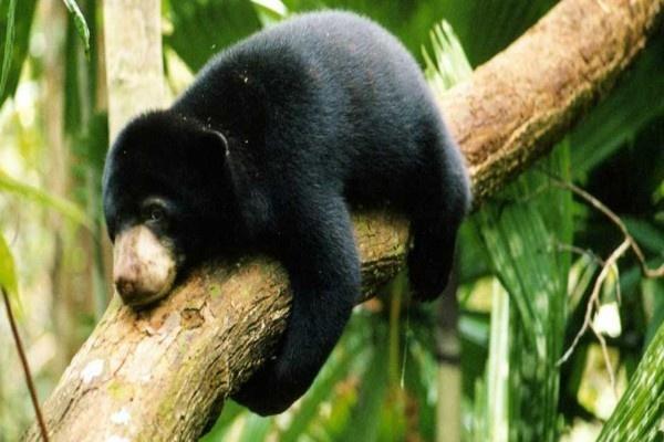 Satu Harapan Beruang Madu Maskot Kota Balikpapan