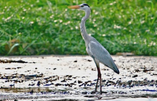Para Pengamat Lakukan Sensus Burung Air di Pesisir Jakarta