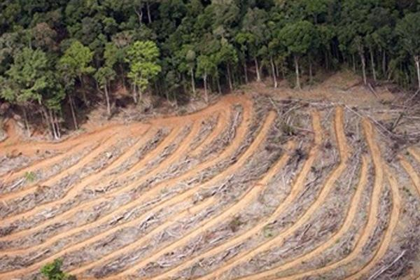the causes and effects of deforestation sociology essay Results 1 - 30  religion cause and effect essay impact of the industrial revolution  23-3-2015   the causes and effects of deforestation sociology essay.