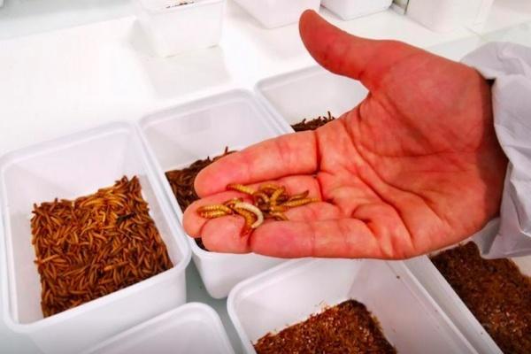 Prancis Bangun Peternakan Serangga Dalam Ruangan Terbesar di Dunia