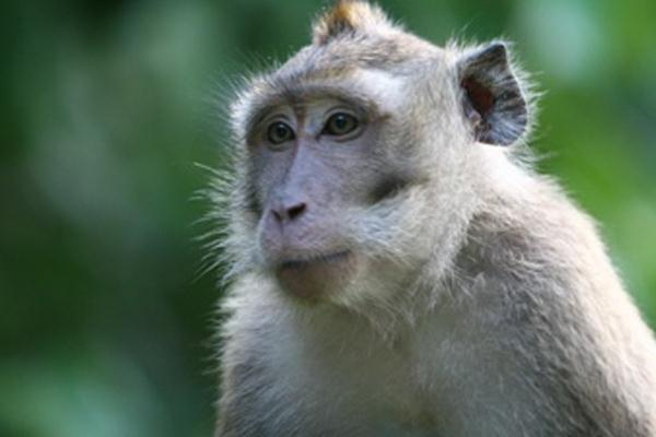 Jurnal Primatologi Indonesia