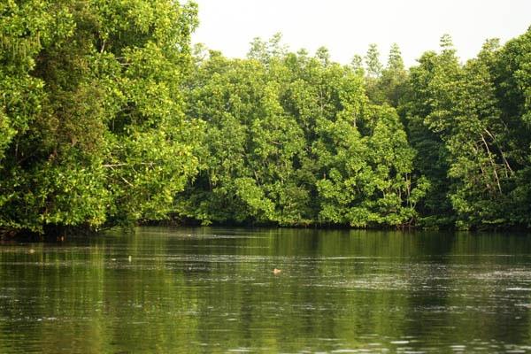 Satu Harapan: Dubes AS Puji Kekayaan Hutan Bakau Mimika