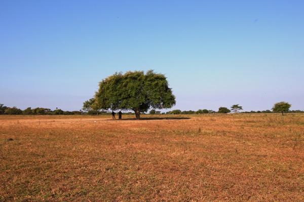Jalan-jalan ke Taman Nasional Baluran