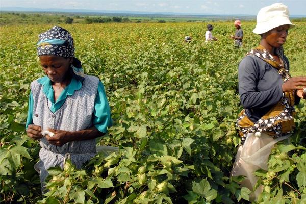 Satu Harapan Pertanian Afrika Bagian Selatan Butuh Bantuan Masih