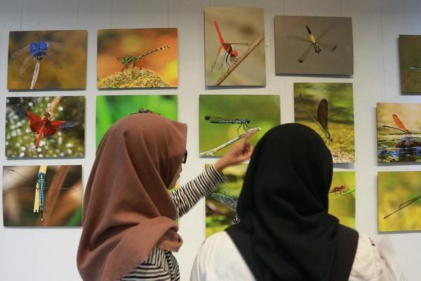 Pameran Seni Foto: Dragonfly, Pengetahuan dan Citra