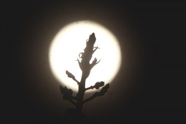 Penampakan Flower Moon di Depok