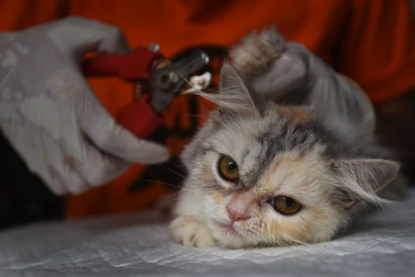 Kiat Merawat Kucing Lokal